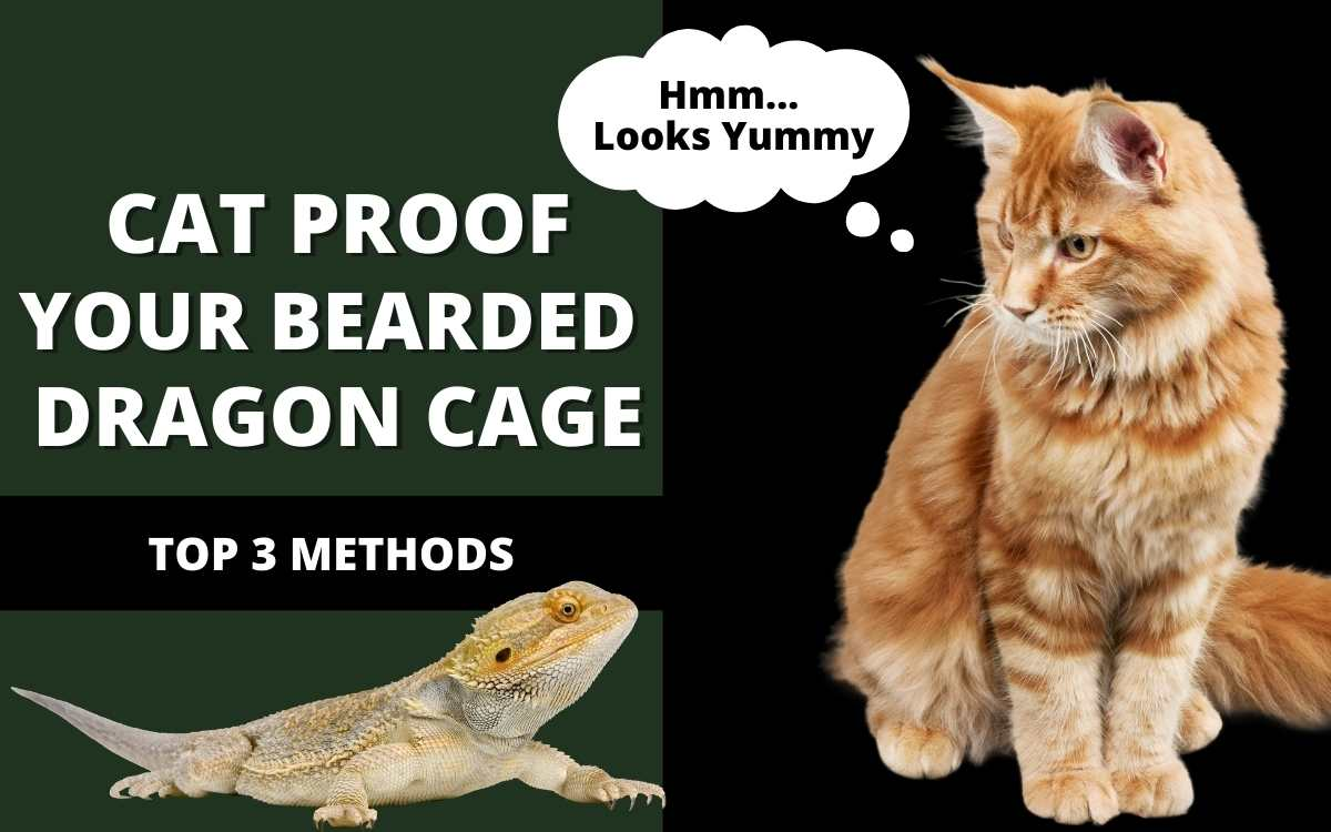 cat-proof-bearded-dragon-cage-banner