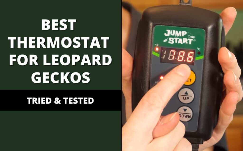 best thermostat for leopard geckos